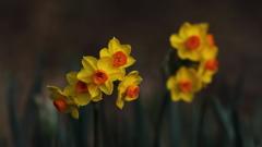 花便り - 春想ふ -