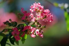 花便り - 夏の終わりを間近にして -