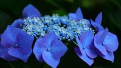 花便り - 活き活きとしたシベたち -