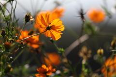 花便り - 秋の野性味 -
