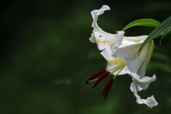 花便り - 威厳に満ちた花姿 -