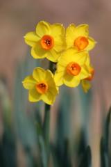 花便り - 華やぎの黄花 -
