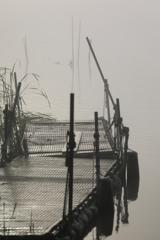 印旛沼・朝景 - 濃霧の桟橋 -