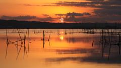 印旛沼・朝景 - 暁色の世界 -