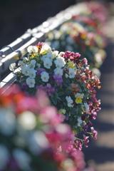 花便り - パンジーの咲く橋 -