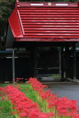 花便り - 彼岸花の咲く山門前 -