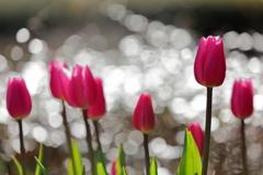 花便り - 華やぐピンクツイスト -