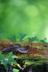 花便り - 気になる小さな木 -