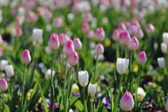 花便り - 冬花壇のホワイトドリーム -