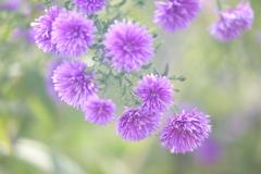 花便り - 優し気な秋の陽射しの下で -