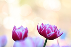 花便り - シャンパンゴールドの華やぎの下で -
