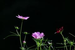 花便り - 秋画彩 -