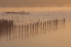 印旛沼・朝景 - 濃霧の朝 -