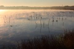 印旛沼・朝景 - 斜光の朝霧 -