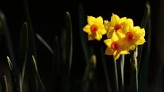 花便り - 輝きの黄房 -