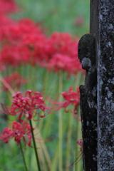 花便り - 古刹の彼岸花 -