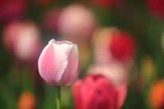 花便り - 穏やかな美しさ -
