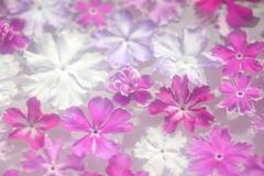 花便り - 水盤の楽しみ -