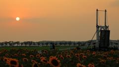 印旛沼・風車 - 夕陽と跳ね橋 -