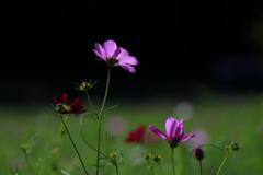 花便り - 秋の光を浴びて咲く -