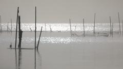 印旛沼・朝景 - 煌めく海のイメージで -