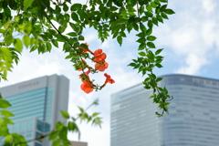 花便り - オアシスに咲く橙花 -
