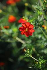 花便り - 夏の野性美 -
