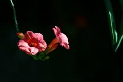 花便り - 誉の音色 -