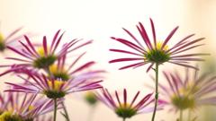 花便り - 微笑の裏側 -