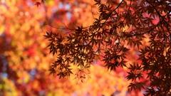 花便り - 萌える秋彩 -
