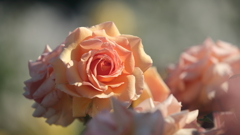 花便り - 春のフレグラントアプリコット -