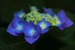花便り - 堪らない彩りの季節 -