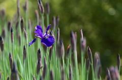花便り - 新緑と文目 -