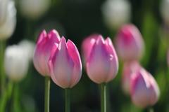 花便り - 澄んだ光の中のファーストクラス -