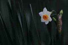 花便り - 寒い季節の清々しさ -