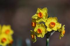 花便り - 睦月の黄 -