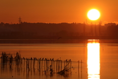 印旛沼・朝景 - 大きな朝陽 -