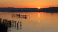 印旛沼・朝景 - 昇陽 -
