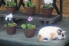 生き物写真館 - 三毛の午睡 -