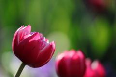 花便り - 麗らかな冬の日に咲く -