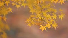 花便り - 晩秋の午睡 -