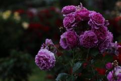 花便り - 愁いのセンティッド・エアー -
