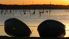印旛沼・朝景 - 冬の朝陽を浴びて -
