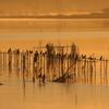 印旛沼・朝景 - 暁色の佇み -