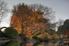 花便り - 揺らぐ秋景色 -