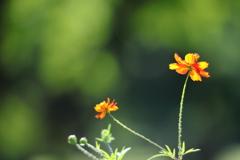 花便り - 残暑の中で咲く -