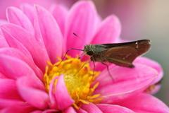 生き物写真館 - 秋花壇の訪問者 -