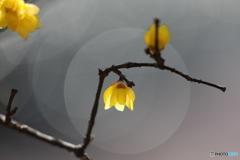 花便り - 灯り蝋 -
