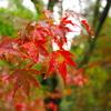 雨の日の紅色