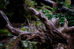 朽木の存在感